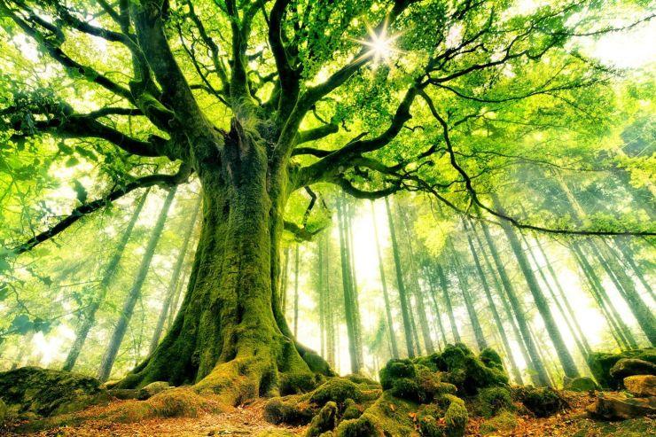 arbre soleil.png